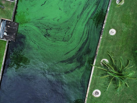 Aerial view of toxic algae bloom flowing in a canal