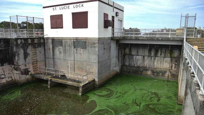 Pools of blue-green algae blooms are seen in the downstream side of the St. Lucie Lock in the C-44 canal leading to the St. Lucie River on Monday, July 9, 2018, in Martin County. The Army Corps of Engineers suspended discharges from Lake Okeechobee again late Sunday.