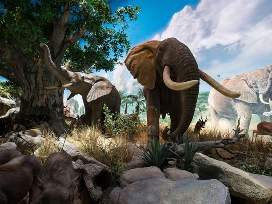 The long-awaited Wonders of Wildlife National Museum