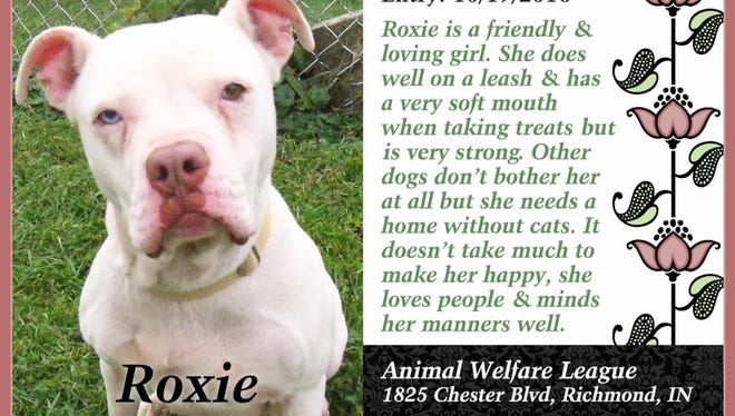 Roxie is available for adoption from Animal Welfare League.