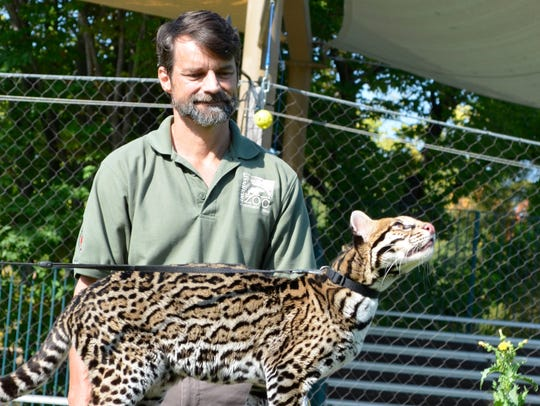 Bill Swanson is pictured with Sihil, an ocelot created