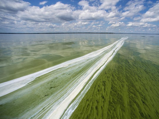 White scum indicates a post-peak portion of a cyanobacteria bloom on Missisquoi Bay near Highgate Springs on Wednesday.