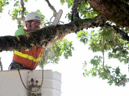 A worker with Elwood's Tree Service breaks down a tree that has to be removed for safety concerns in a construction site at Salem Health on Wednesday, June 10, 2015.