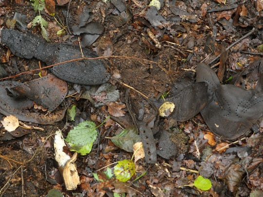 Remnants of shoes are discovered in a forest near the