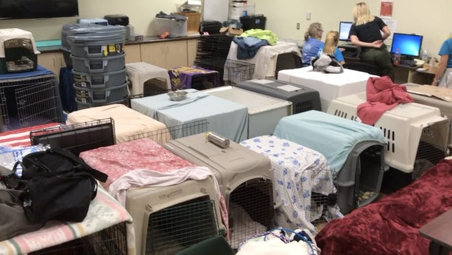 Dog kennels fill the multipurpose room at the Camarillo Animal Shelter. The population of the shelter has temporarily doubled in the wake of the Thomas Fire.