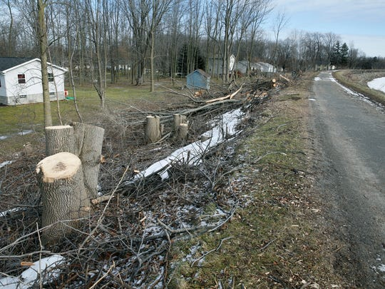 Trees that were cut down along Erie Canal properties