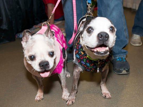My Furry Valentine pet adoption show