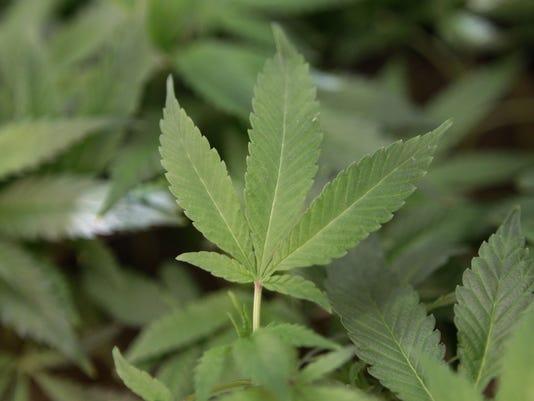 INI marijuana leaf