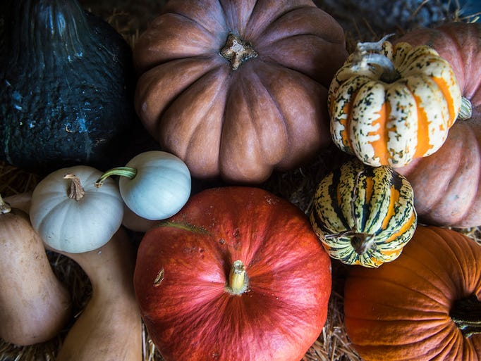 A variety of pumpkins and squashes are available at