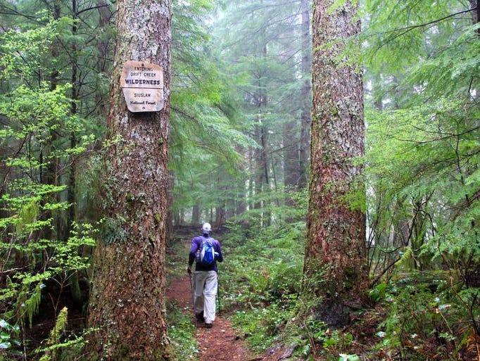Best Central Coast Range hikes. No. 4 — Drift Creek Wilderness.