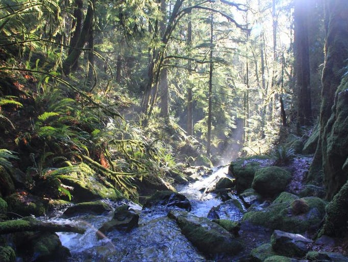 Soda Creek rolls into the lush, mossy canyon at Cascadia State Park.