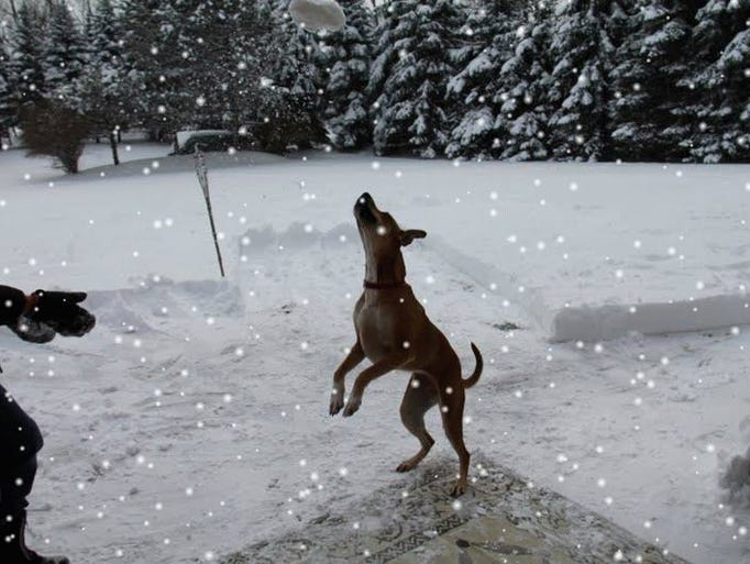 Sending a photo I took of my dog Rogue - she loves playing outside in the snow. Photo taken today in Clarence (Sunday, Dec 15th)