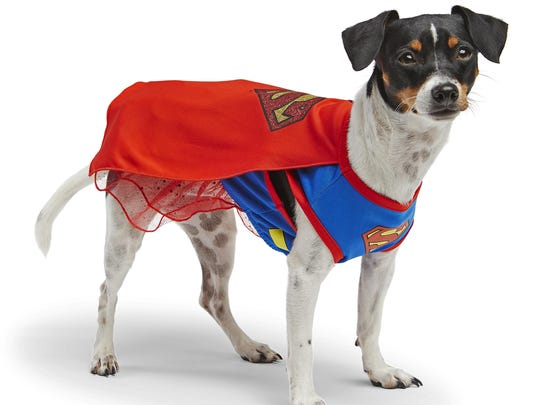 This 2015 photo provided by PetSmart shows a dog in a Supergirl costume for Halloween.