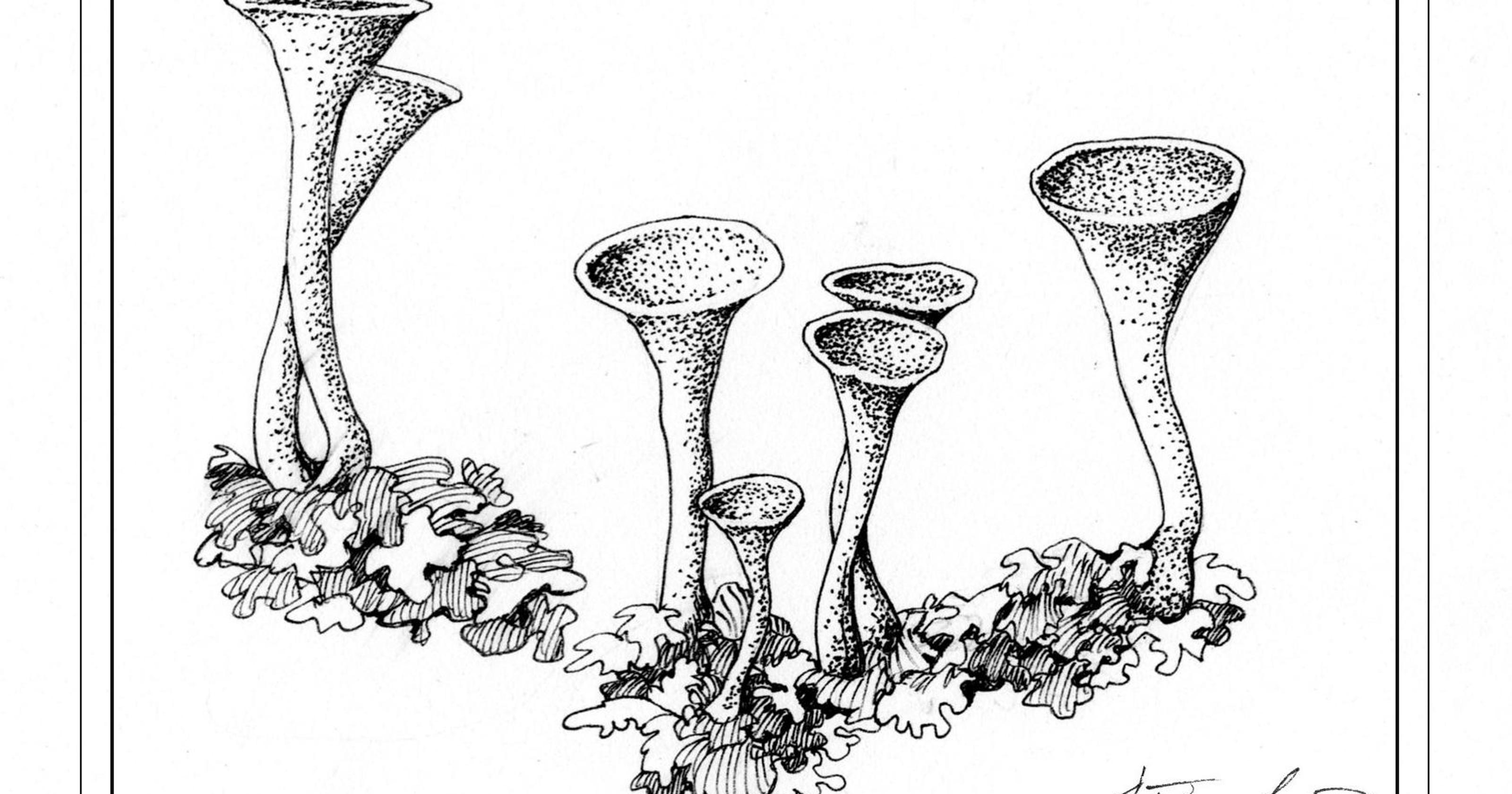 lichen growth rate