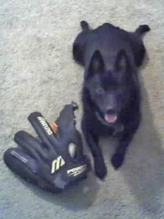 Lost dog bear