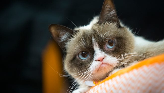 Grumpy cat is a frowning feline from Morristown, Arizona.