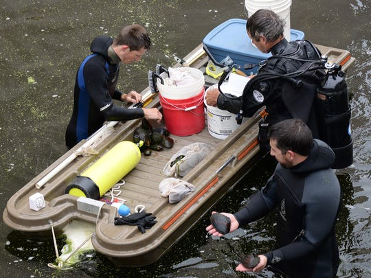 "DNR divers Jay Schiefelbein, Randy Piette and Matt Schaeve unload a catch of freshwater mussels Wednesday during a ""rescue"" operation on the Pigeon River in downtown Clintonville."