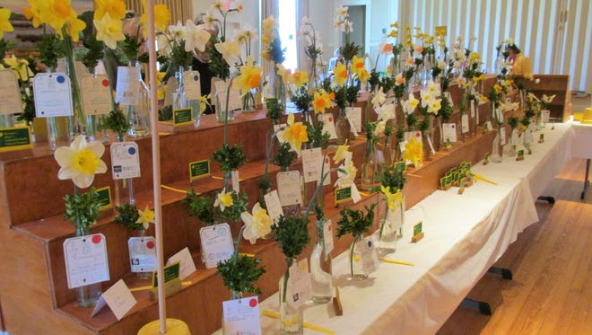The Somerset County Garden Club Daffodil Show is April 2-3, 2016. Event is free and open to the public.