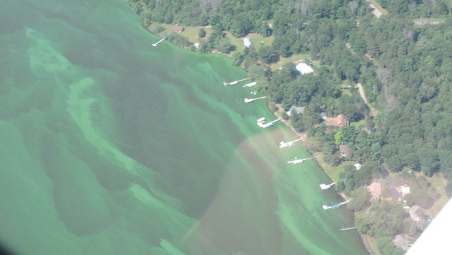 Blue-green algae blooms are visible in this aerial photo of the western shore of Petenwell Lake.