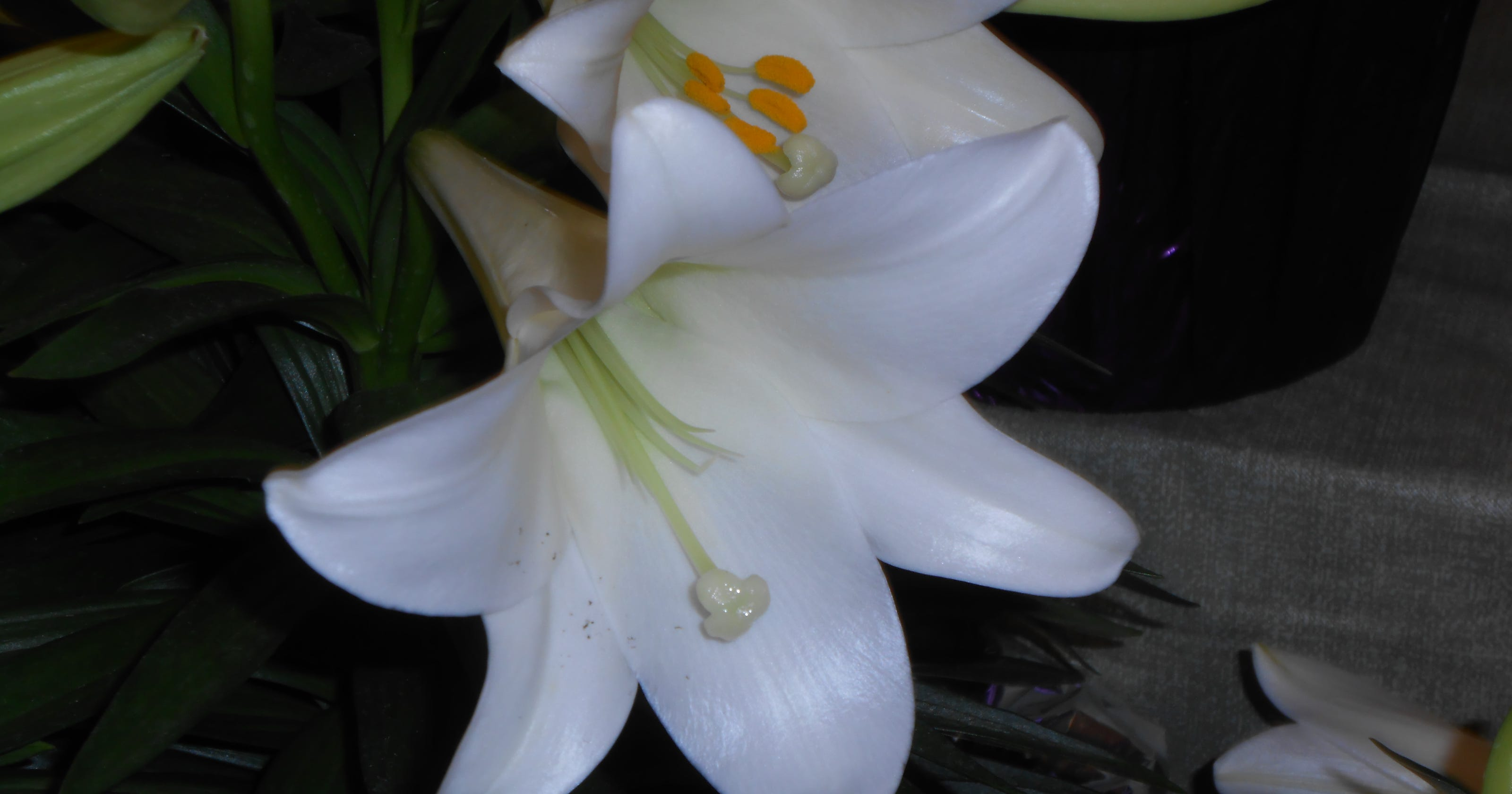Garden column care for your easter lilies izmirmasajfo