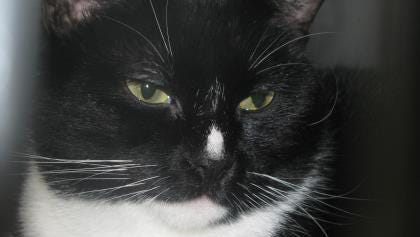 Louise will make a loving family cat, according to her human friends.
