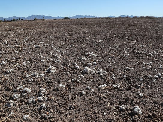 The Palo Verde Center is a proposed cannabis production facility that would be built on this former cotton field in Blythe, California, January 24, 2018.
