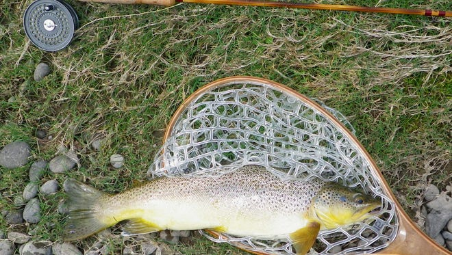 A nice brown trout taken in the Catskills during a Hendrickson spinner fall.