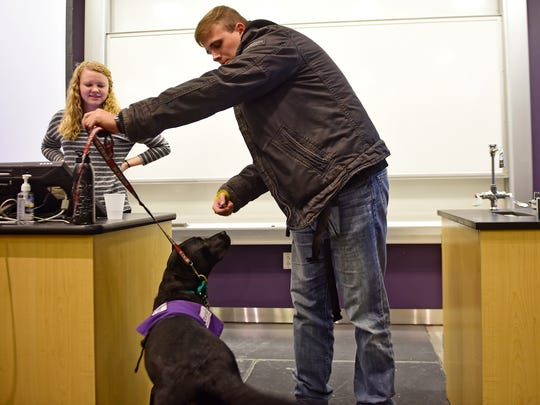 At the Dickinson Dog House's meeting on Oct. 26, 2017, senior Chris Snyder from Fogelsville teaches the group how to lead SSD Chickadee through a figure eight. Dickinson Dog House is Special Interest House on campus that is run in collaboration with Susquehanna Service Dogs. Students in the club raise service dogs, like SSD Chickadee.