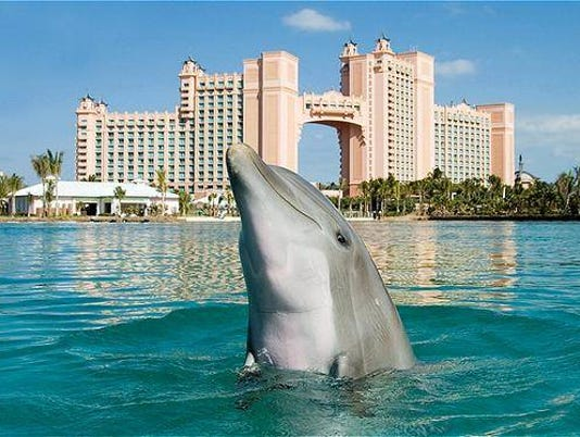 636246662593022310-Dolphins-and-towers-credit-Atlantis-Paradise-Island.JPG