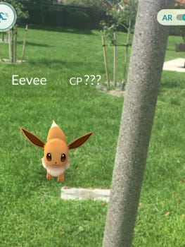 An Eevee Pokemon frolics in a Miami-Dade County park.