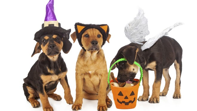 Puppies Dressed for Halloween