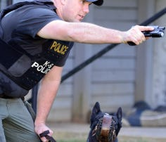 Greenville police K9 Saber on his first track after a Family Dollar armed robbery.