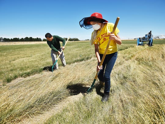 Hermiston High School sophomore Avery Treadwell, of Hermiston, Ore., helps harvest grass seed with extension agronomist Ray Qin, of Hermiston, at the Hermiston Agricultural Research and Extension Center.