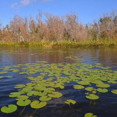 How catching 'junk' fish cleans up Central Florida lakes