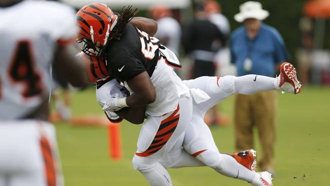Cincinnati Bengals linebacker Vontaze Burfict puts a hit and tosses halfback Cedric Peerman during training camp downtown.