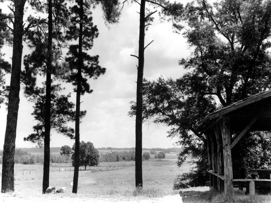Stock raised to supply food for Central Louisiana State Hospital grazes in pastures in 1954 on site of what would become Buhlow Lake.