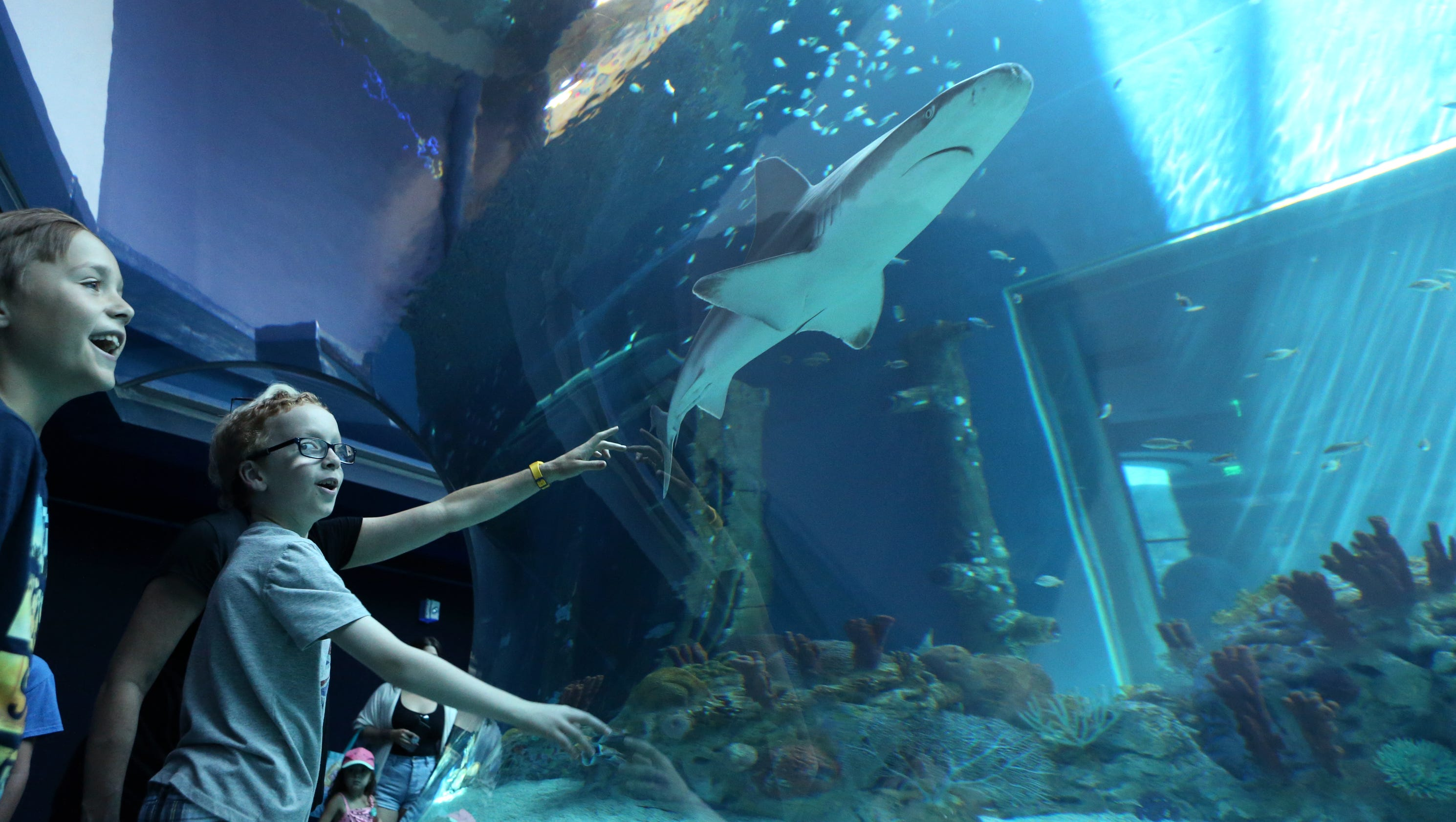 state aquarium celebrates caribbean journey with grand opening