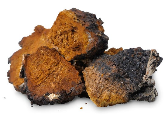 """Chaga is considered the """"king of mushrooms"""" and can"""