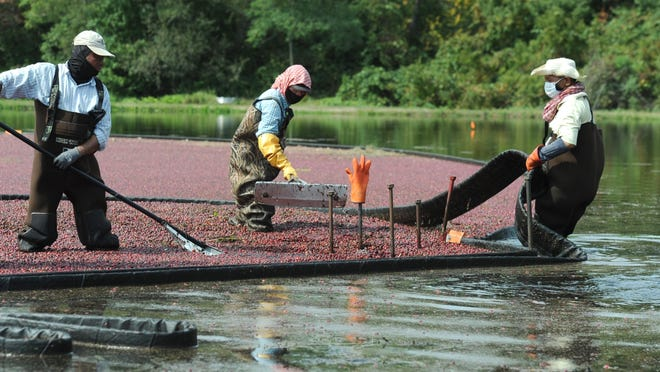 The Cape Cod Cranberry Growers Association says months of warm, dry weather have put a strain on the cranberry industry this year.