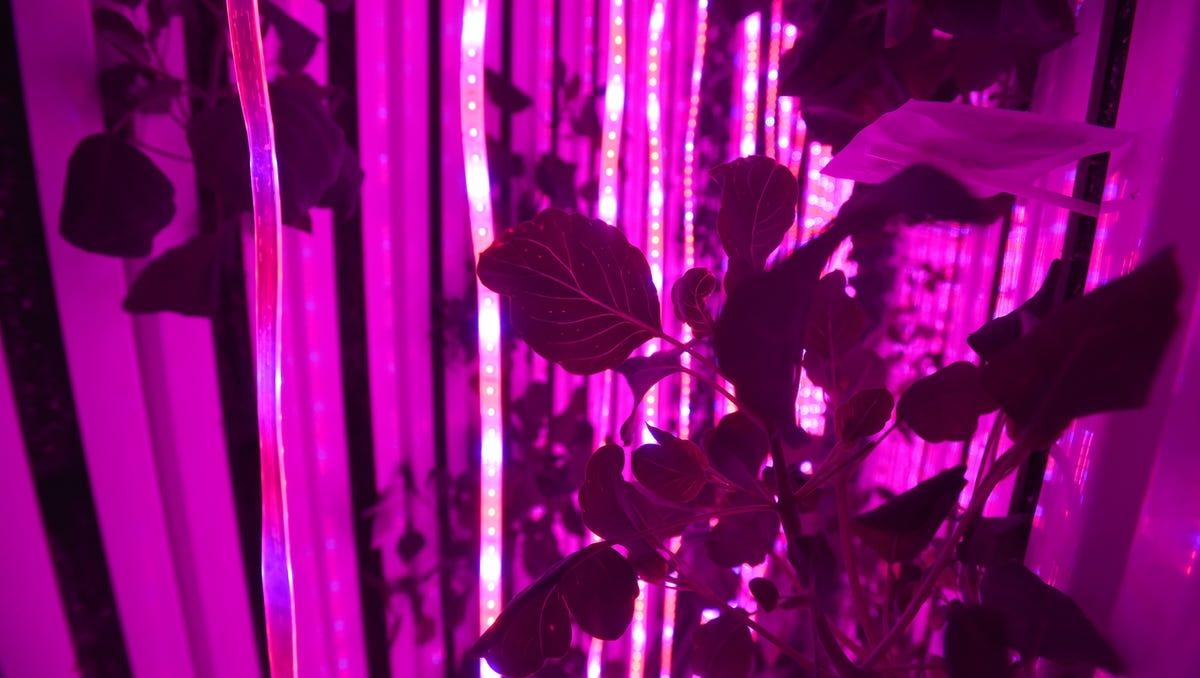 Square Root plants bright lights, big cities farms
