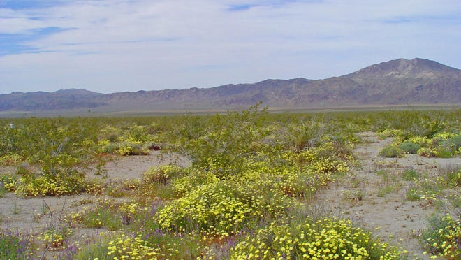 The Coachella Valley is a broad plain that features five different soil types that exist at varying depths and deposits.