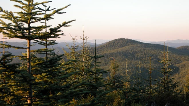 The Tillamook State Forest.