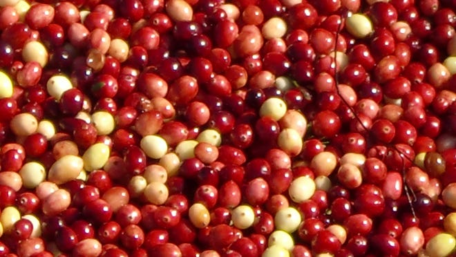 Native Americans used the cranberry for many purposes, including healing wounds, dying fabrics and curing meats.