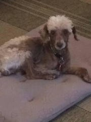 After weeks of a steady diet and medical treatment, Kayzer is almost ready for adoption.