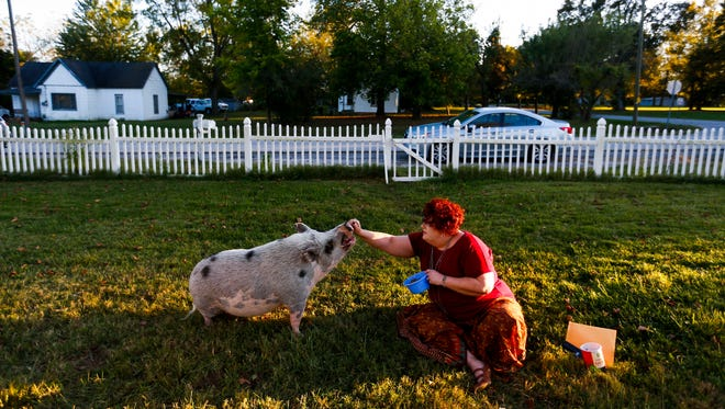 Carolann Scott Leo feeds her pig Francis Bacon in her front yard in Marionville on Thursday, Oct. 12, 2017.
