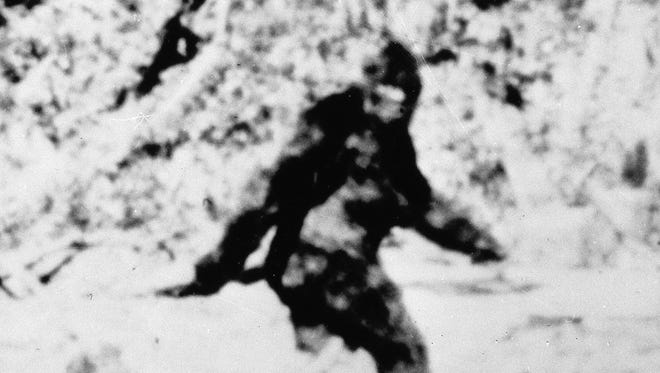 This photograph, which the late Roger Patterson said he made in 1967 in Northern California, is said to show a Sasquatch or Bigfoot. The picture taken from 16mm movie file, is considered one of the best pieces of evidence of the existence of the species.