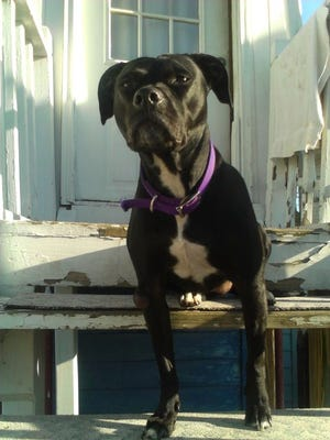 Stella, a mixed-breed dog missing since Friday when a Fords house caught fire, was found dead Tuesday inside the home.
