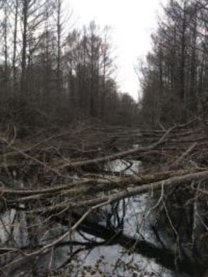 A Hessmer man was arrested Friday for allegedly cutting down dozens of trees on the Spring Bayou Wildlife Management Area in Avoyelles Parish, according to the Louisiana Department of Wildlife and Fisheries Enforcement.