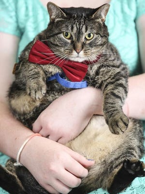 Limberbutt McCubbins is not all that limber of a cat, but he is a presidential candidate. (Photo: