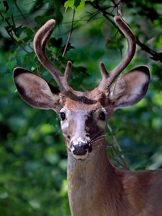 635815409388380597-deer